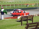 Mustangs at Sandown (2)